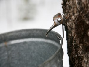 maple_syrup_tap