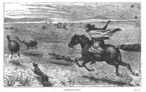 line print of gaucho from the 1800s riding a horse after ostriches, swinging 3 stones tied together, a set of boleadores, to tangle the ostrich in.